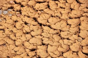 cracked, dry soil